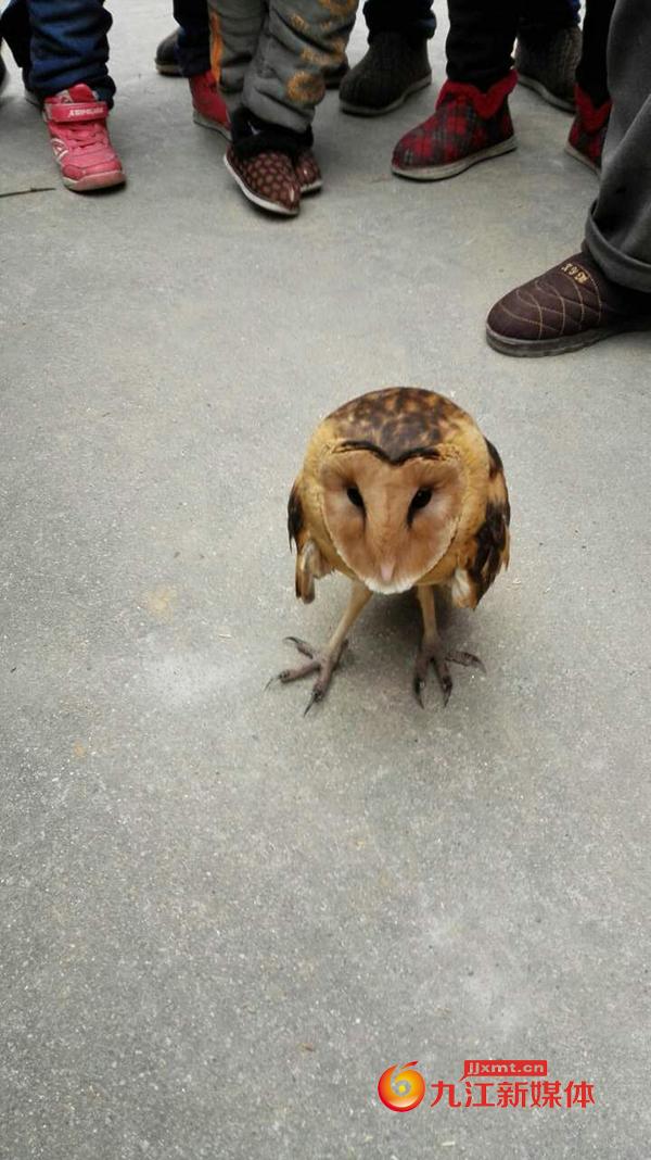 记者王平:国家二级保护动物草鴞2.jpg
